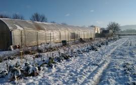 orti d'inverno