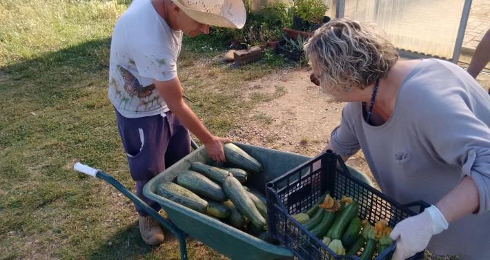 mese delle zucchine